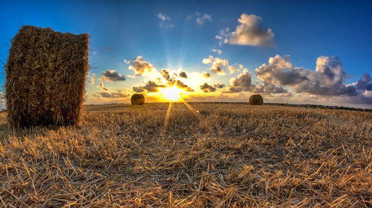 Photograph allez les blés !  by AdrienC Photography on 500px