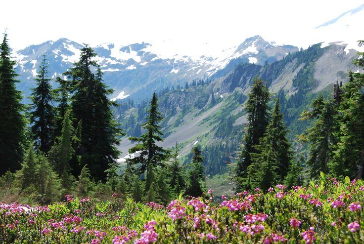 Washington StateFavorite Places, Wa States, Beautiful Washington, States Mountain, 600402, Travel, Shoppingwashington States, Washington States Hom, Pretty