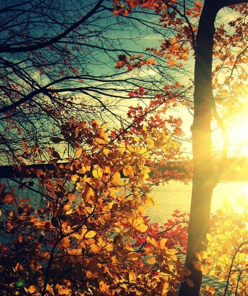 the fall...Fall Sunsets, Blue Sky, Nature, Trav'Lin Lights, Autumn, Body Image, Colors, Beautiful, Leaves