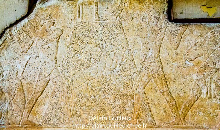 Egypt, Cairo, Egyptian Museum, relief from a tomb in Meidum : Harvest. 5th dynasty, Action, Ancient Egyptian Art, Art, Bas-relief, Caire, Cairo, Color Image, Cultural heritage, Dynasty 5, EMC, Egypt, Egyptian Monument, Egyptian Museum Cairo, El Mathaf El Masri, Geography, Kairo, Low relief, Lower Egypt, Maidum, Material, Meidoum, Meidum, Meïdoum, Middle East, Musée Egyptien du Caire, Nile Delta, No People, North Africa, Old Kingdom, R41, Relief, Tahrir Museum, Tomb, ancien, archeology…