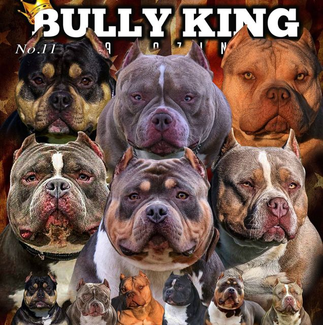 Issue No 11 The 2018 Official Mascots Bully Breeds Bully Dog Animals Wild