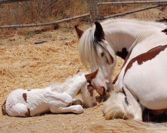 Momma and her newborn
