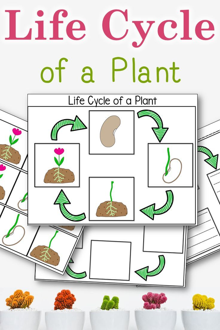 Great cut and paste activity for learning the life cycle of a plant.