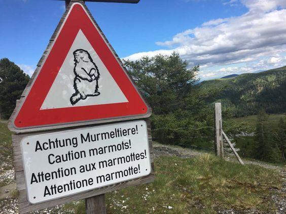 Kulinarische Genussreisetipps aus den Nockbergen in Kärnten. Und schnell wird klar, hier gibt es Murmeltiere. Die Region Nockberge und Millstätter See in Kärnten, Österreich aber hat viel mehr in Sachen Genuss zu bieten.