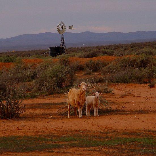 photoj South Australia, Flinders Rangers, outback