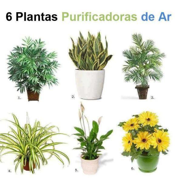Sabe-se que algumas plantas temcaracterísticasespeciais como eliminar determinados fungos ou substanciasnocivasno ar, outras quem absorvem maisdióxidode carbono, etc. Aquiestãoalgumas dessa…