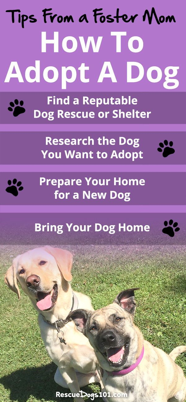 How To Adopt A Rescue Dog Your Step By Step Guide Dog Adoption