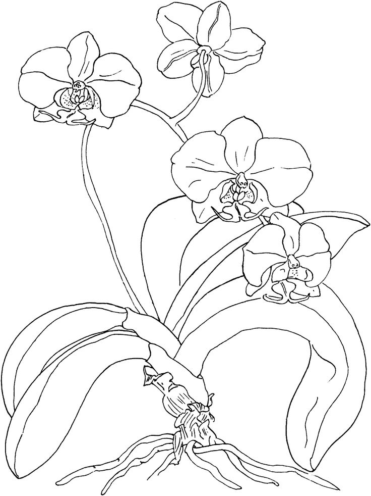 Spring Flowers Colouring Pages Photo Crafts Pinterest