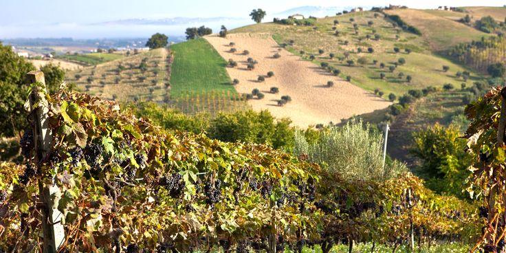 Junge Winzer in den Abruzzen konzentrieren sich auf den Montepulciano d'Abruzzo und ihre regionalen weissen Rebsorten als Qualitätsweine und stehen nun vor der grossen Aufgabe, die Welt von deren Qualität zu überzeugen.