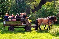 Häst och vagn - hästupplevelse i Aneby - Skärsjöhäst