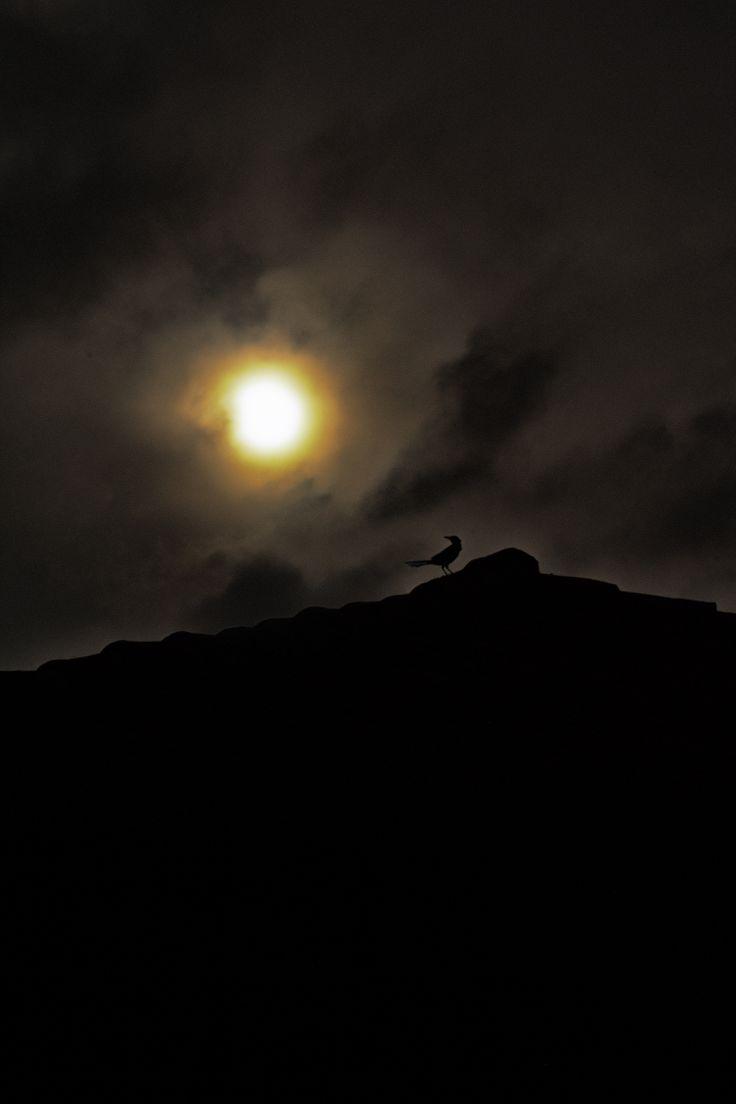 Un ave despidiendo la tarde...