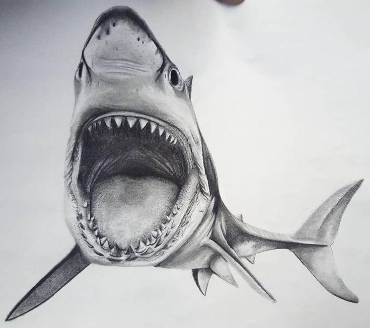 степлер акулы картинки карандашом время