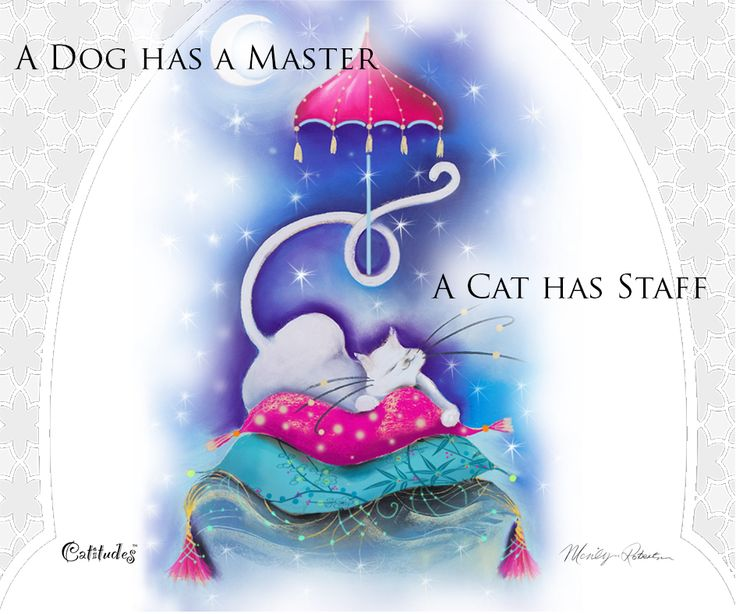A #cat #illustration by #MarilynRobertson. This is so true the source of this #quote is unknown. http://catitudes.co.uk Facebook : https://www.facebook.com/marilynrobertsoncatitudes?ref=hl