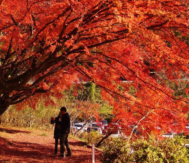 紅葉@香嵐渓 Autumn leaves @ Kourankei #香嵐渓 #愛知 #紅葉  #秋  #kourankei #aich #autumnleaves  #japan #東京カメラ部 #写真好きな人と繋がりたい #写真を撮ってる人と繋がりたい #ファインダー越しの私の世界  #photographylovers #team_jp_ #japan_art_photography #jp_views #igers #tokyocameraclub #photographylovers #japanigram #PHOS_JAPAN