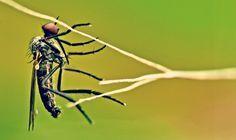 Maak Zelf Biologische Anti Muggen Crème