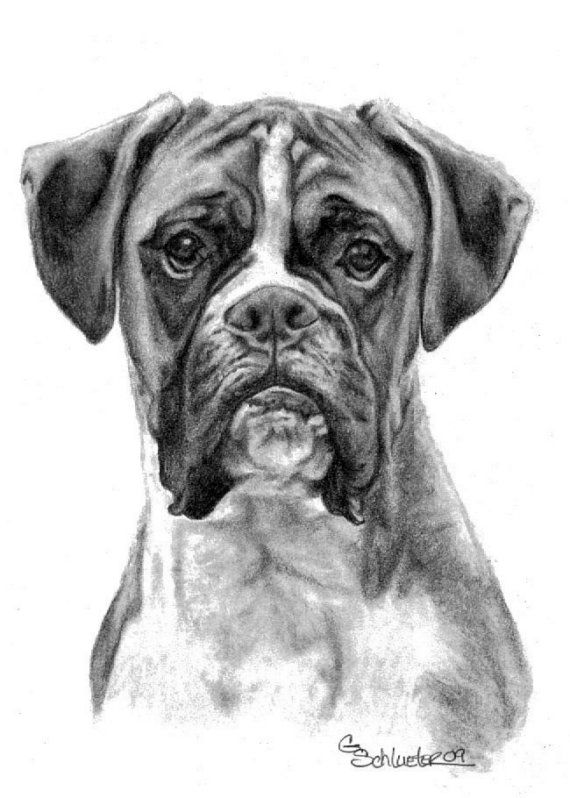 Dawg Daze Greeting Cards - The Boxer  5.5 x 8.5 -  10 pk