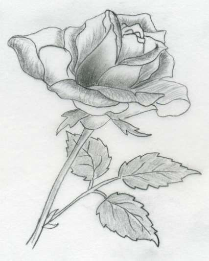 How about this one with the leaves only on one side? The sequence of all these rose drawings is the very same as in the first example.    By...
