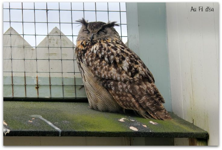 Au Fil d'Isa: Irlande #5 Les oiseaux de proie du Burren #Ireland #Burren