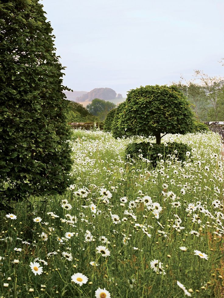 At Appleton Manor, beech topiaries in an oxeye daisy–filled meadow. Photographed by Allan Pollock-Morris, Vogue, November 2013.