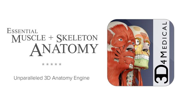 3D4Medical's Essential Muscle + Skeleton Anatomy app is a valuable learning and reference tool for physical therapists, surgeons, medical students and nurses.