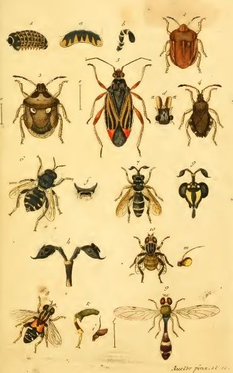natural history bees & other insects from the 1700's.  Insecten Sammlung, Sturm 1796
