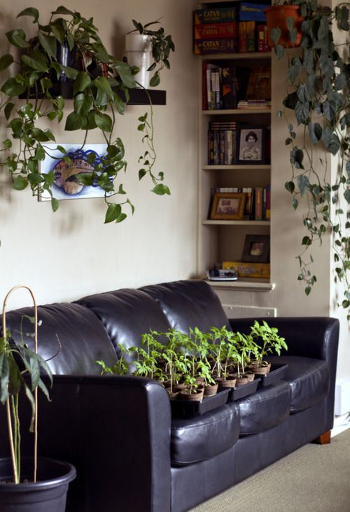 Apartment Gardening Project