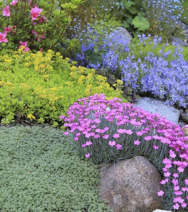 Skalniak Rock Garden Plants Beautiful Gardens Rock Garden