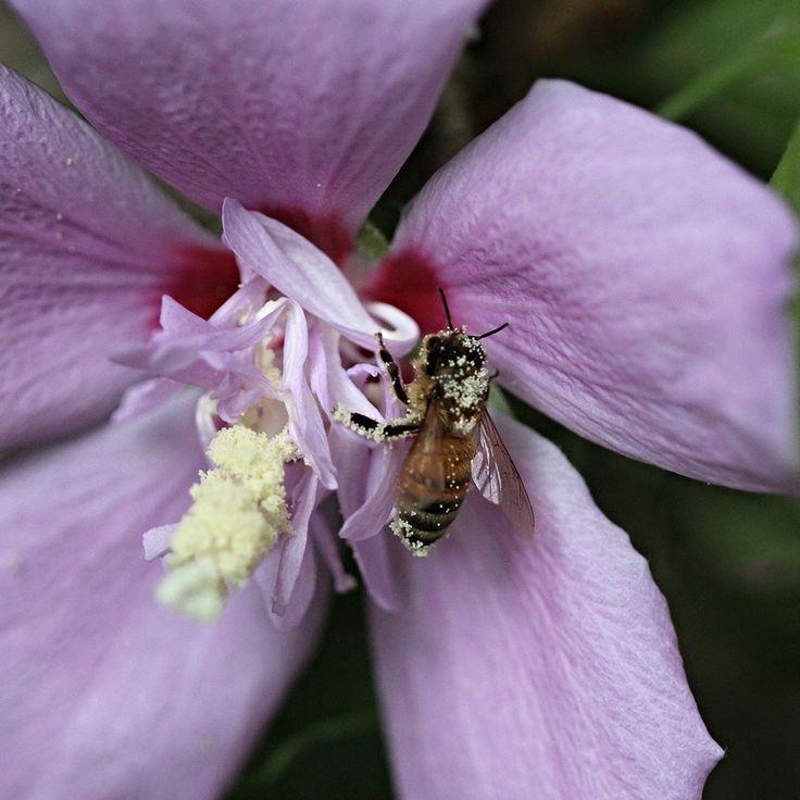 Pollen Sprinkles