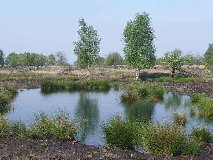 Het Bargerveen