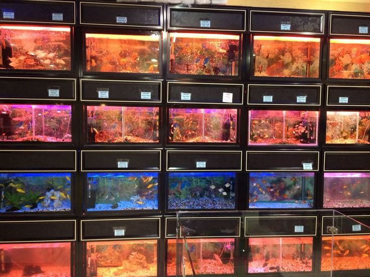 22 best pets at kangar pet shop in silicon oasis dubai for Fish and more pet store