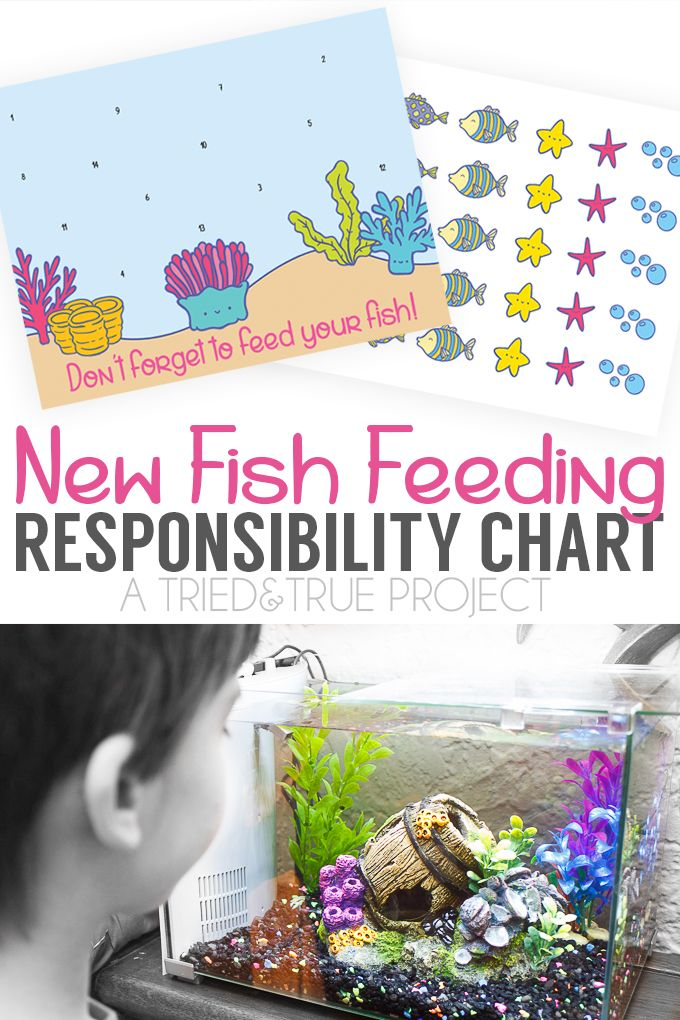 17 best images about popular printables on pinterest for Fish feeding chart
