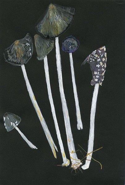 Roger Cans, Coprins noir d'encre, Coprin pie, série sur les champignons, gouache sur papier de couleur, 2008 / ©Musée du Vivant - AgroParistech