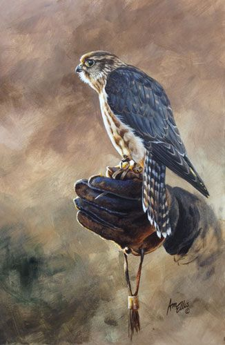 Birds Of Prey Falcon Falconry Wildlife African Game