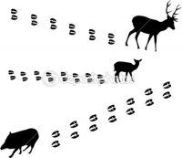depositphotos_6329374-ungulate-animals-and-tracks.jpg