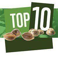 Top 10 Indica-dominant