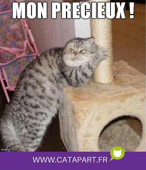 Quand on vous dit qu'il faut leur acheter un arbre à chat !