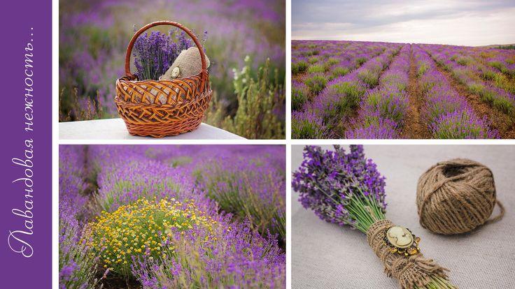 букет лаванды /  a bouquet of lavender