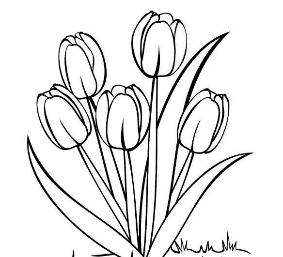 Menakjubkan 17 Sketsa Lukisan Bunga Anggrek Di 2020 Dengan
