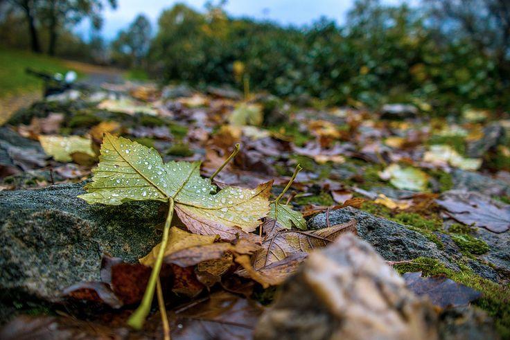 Ősz,amikor a levelek is sírnak...Sárospatak Várkert.