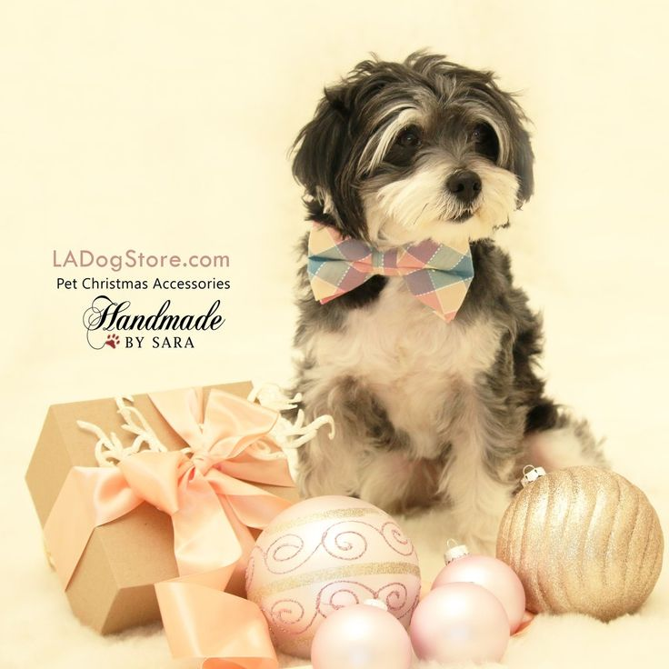 Plaid Dog Bow tie collar, Bow attached to dog collar, Pet wedding accessory