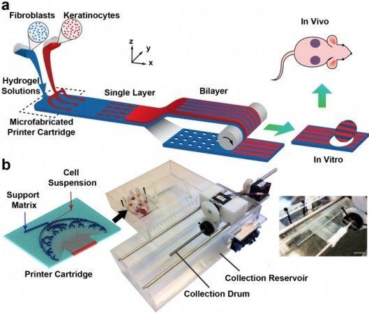 PrintAlive 3D bioprinter creates on-demand skin grafts for burn victims