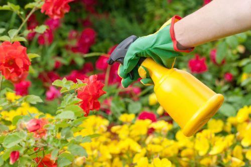 Cara Membuat Pestisida Nabati dengan Mudah dan Murah