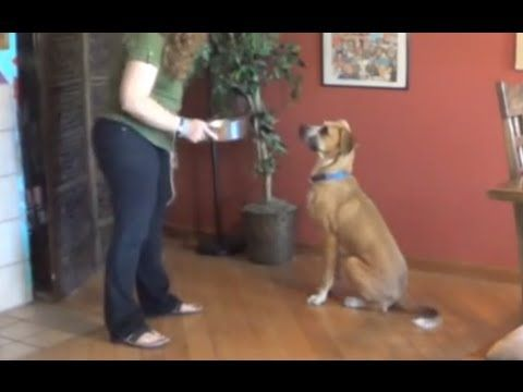 Impulse control – the 6 keys to teaching dogs calm and polite behavior | Smart Animal Training Systems...