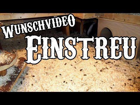 Welches Einstreu ist gut für Meerschweinchen? (Wunsch-Video) | Moehschweinchenfarm.de