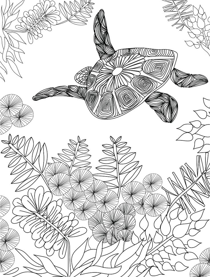 Turtle adult colouring page : Colouring In Sheets - Art & Craft | Art Supplies I eckersleys