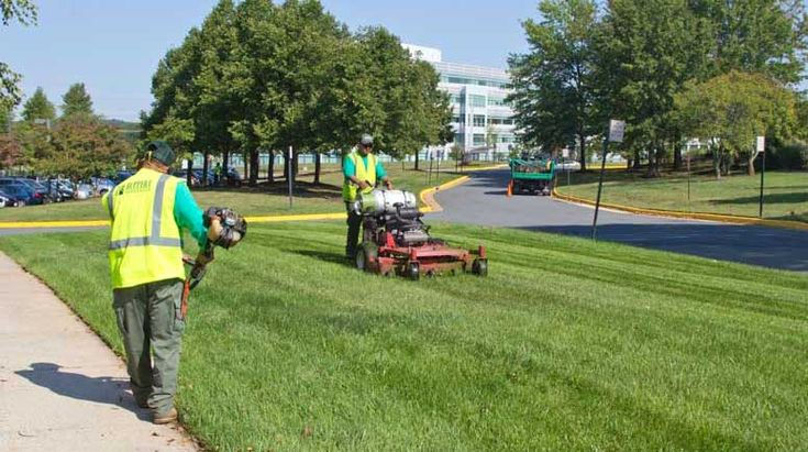 Jwt landscapeswillow tree serviceare landscaping