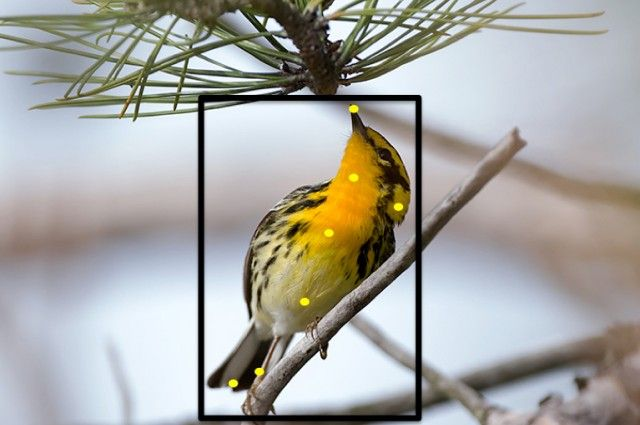 Merlin Bird ID from Cornell Ornithology - New Program Helps You Identify Birds With One Photo   IFLScience
