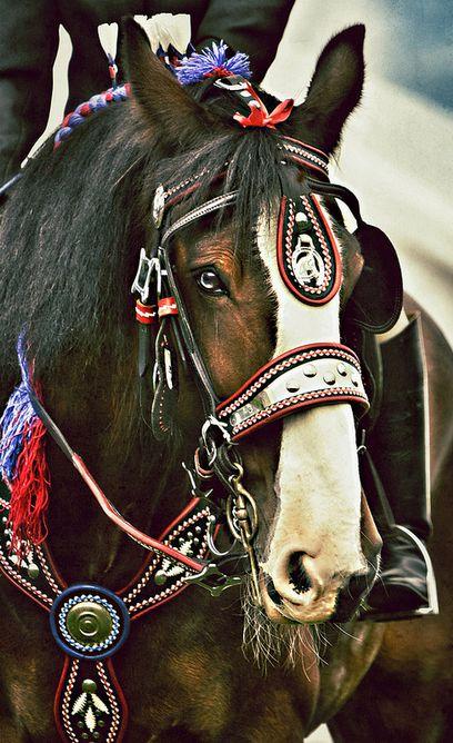 Majestic horse photo. #weloveanimals Follow us @AnimalBehaviorC