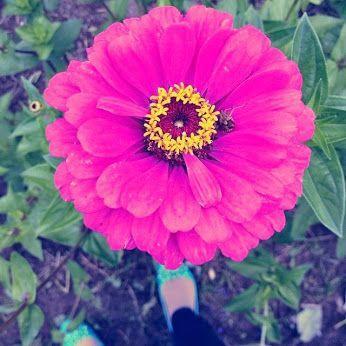 #flower #pink  #nature #beautiful