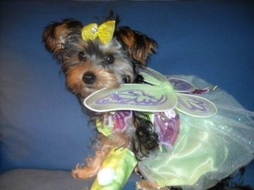 Kisses dressed up for halloween as a Fairy princess